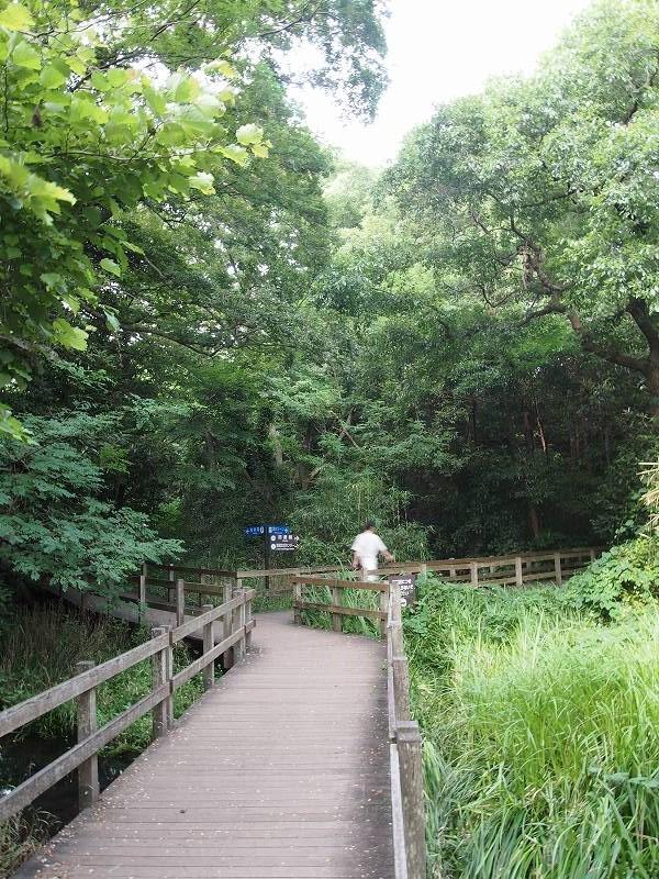 散策路にて撮影。散策路は野性味に溢れ、鬱蒼と生い茂る森の中にいるようである