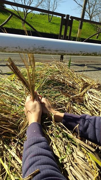 紐ではなくて、藁で束ねるあたりがエコです。