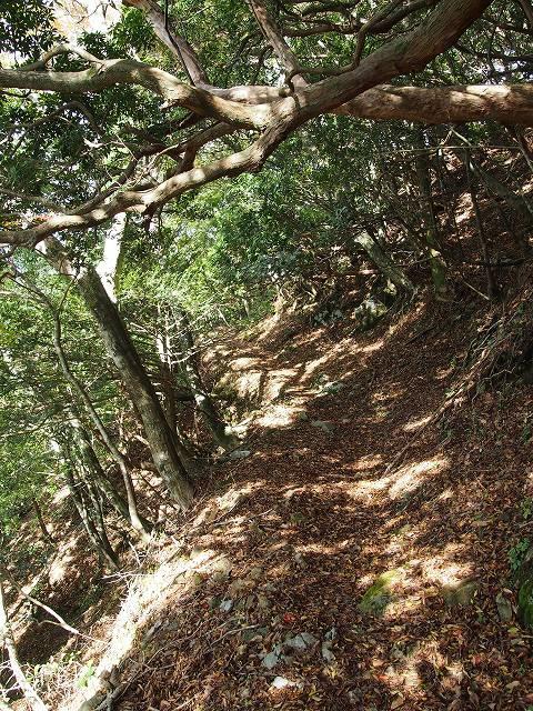 天城峠からの先の道は、比較的なだらかな場所が多いように思います