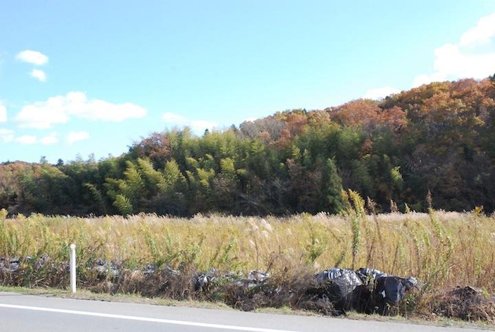 【帰還困難区域】福島県富岡町の黄葉