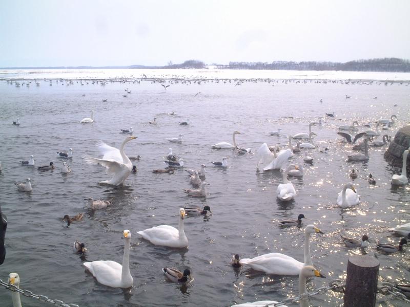 (去年の思い出)白鳥展望公園で財布を落とした