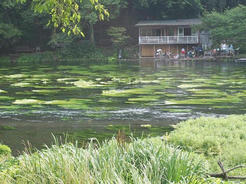 川では子供たちが水遊びをしていた。柿田川公園内の散策路から柿田川を撮影