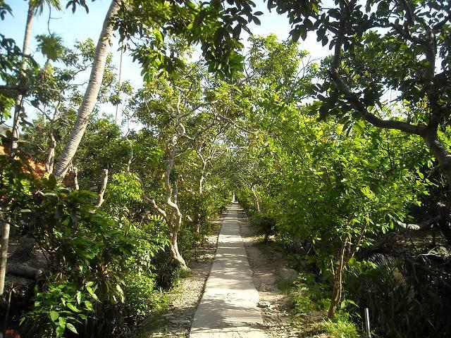 島の小道が美しい