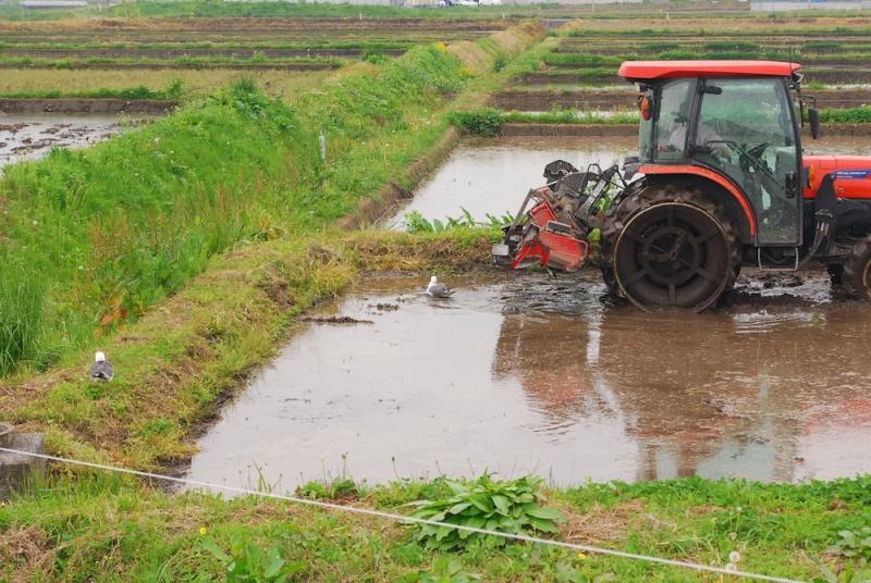 トラクターが田んぼを均した後には、いいものがあるらしい