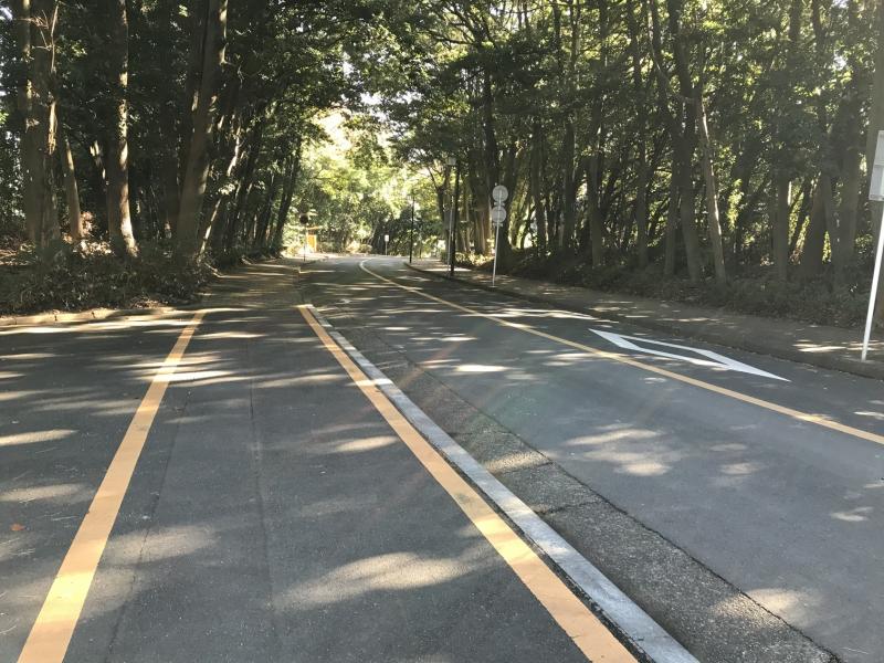 ここも通学路です。晴れた日は歩くと気持ちいいです♪
