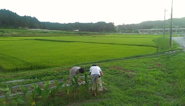 美しい田園風景です。