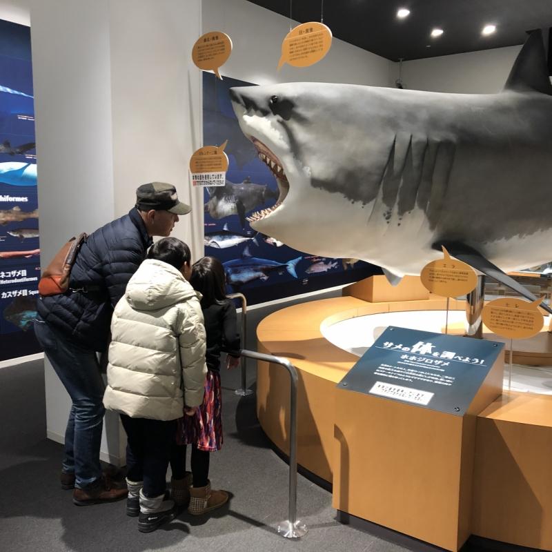 映画「ジョーズ」で知られるホホジロザメの実物大模型にくぎ付け
