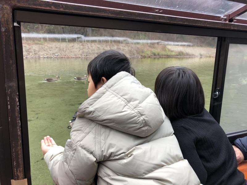 すぐ傍でカモが泳いでいて、餌(1袋50円)をあげられます