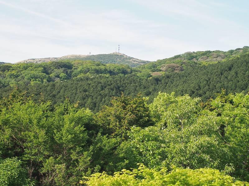 函南原生林(※写真中央部に写っている針葉樹の林は除く)