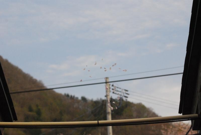 空中に張られたシルクのような糸に桜の花びら