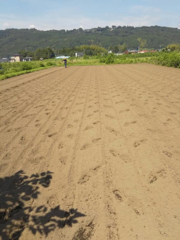 今回種まきをした、なごみ農園さんの畑。