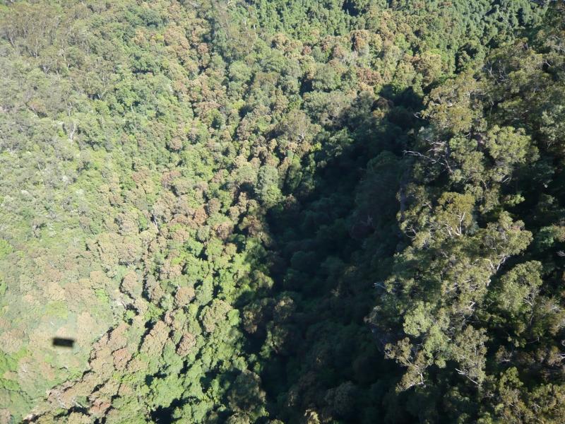 ロープウェイ内部からの写真です。眼下には一面森が広がっています。