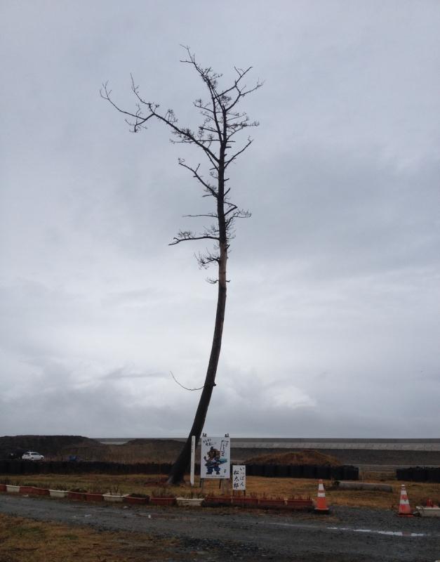 南相馬市の鹿島にある「奇跡の一本松」
