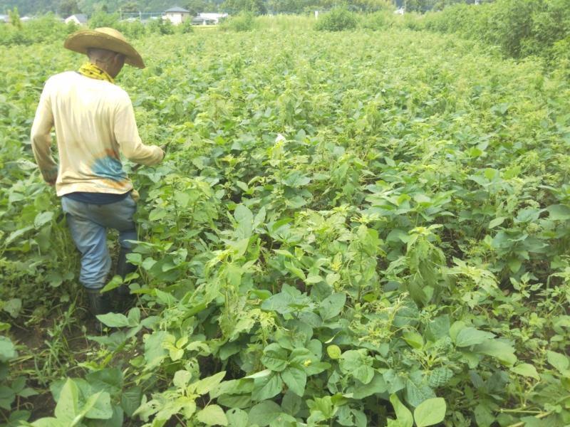 こちらが、なごみ農園さんが大豆の種をまいたところ。