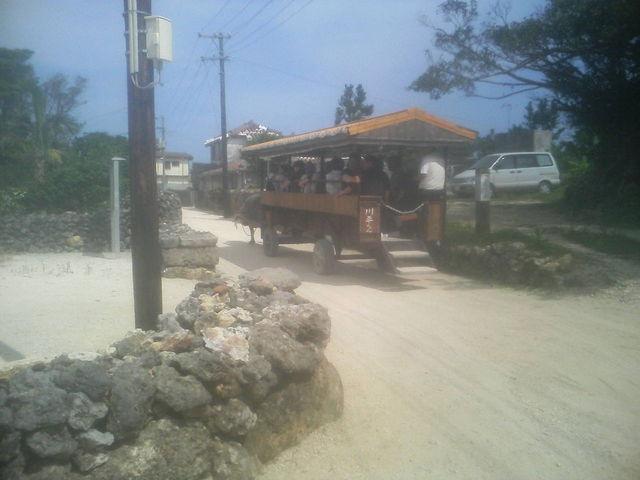 観光客を乗せた水牛車(携帯電話の写メで撮りました)