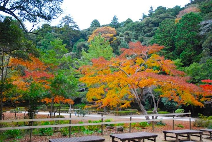 2016年、鹿島神宮の紅葉