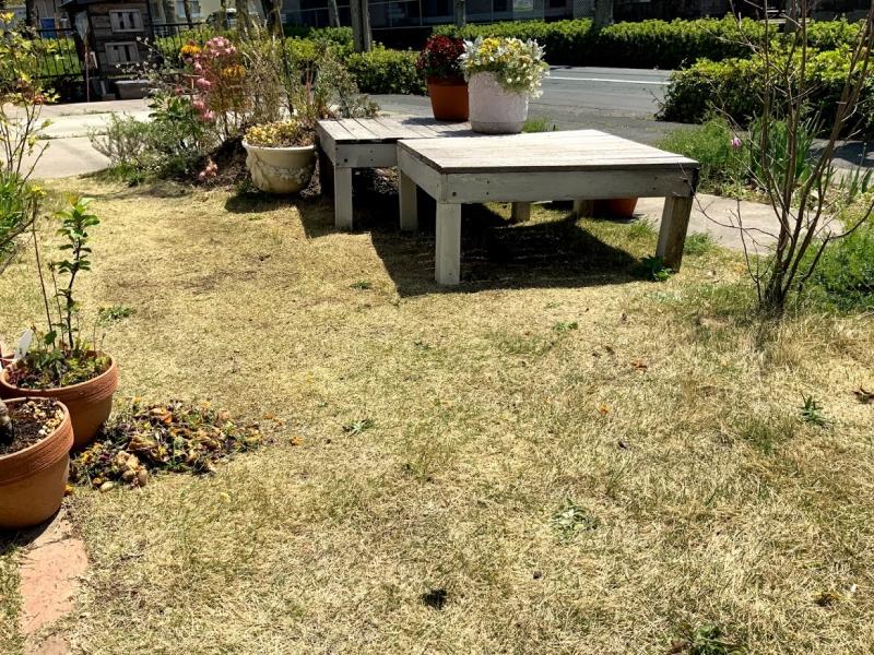 ほとんど手入れしていない芝生を活用。