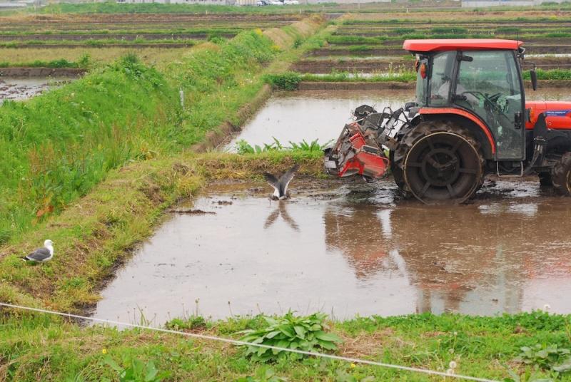 トラクターが方向転換するや、田んぼへダイブ