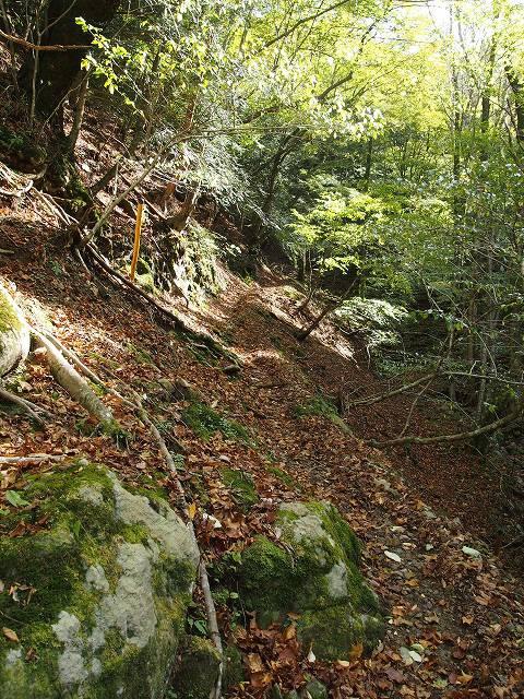 細い山道を登って行きます