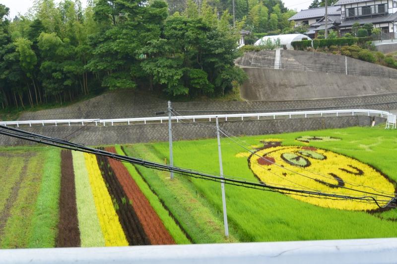 楢葉町の基幹産業である農業は再開。田んぼアートのモチーフはまちのゆるキャラ「ゆず太郎」です
