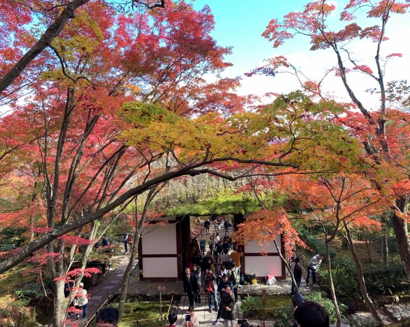 美しい!!! やっぱ京都でしょ。