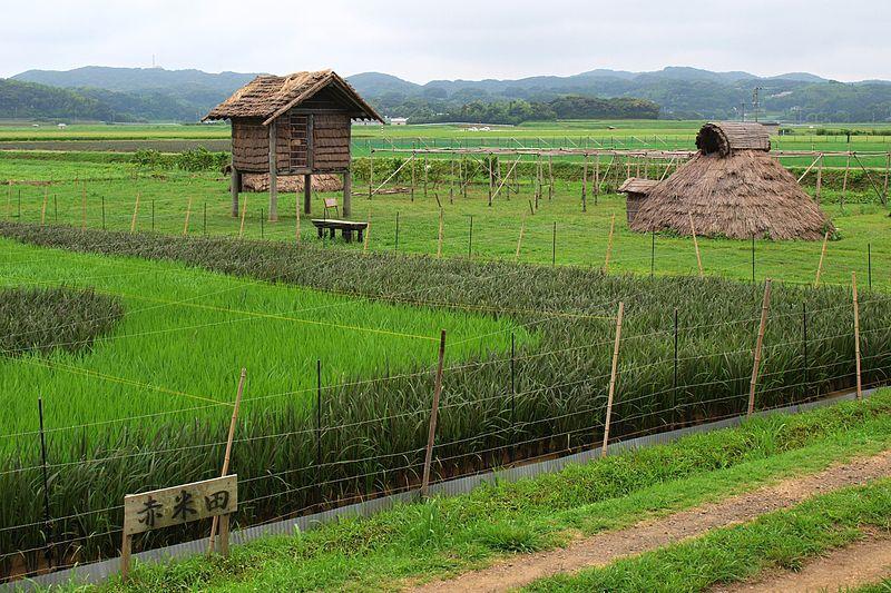原の辻遺跡にある竪穴式住居と赤米田(復元)