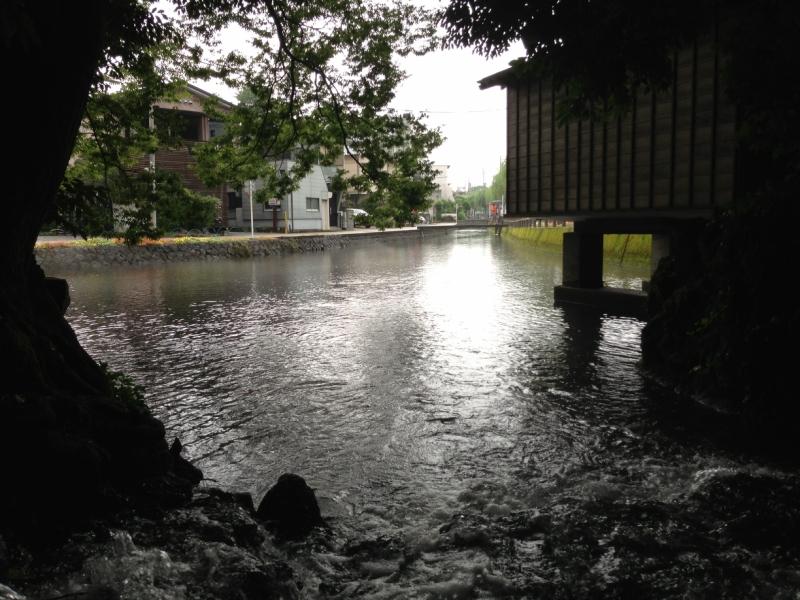 白滝公園から湧き出る水は、そのまま桜川へと流れていく……。