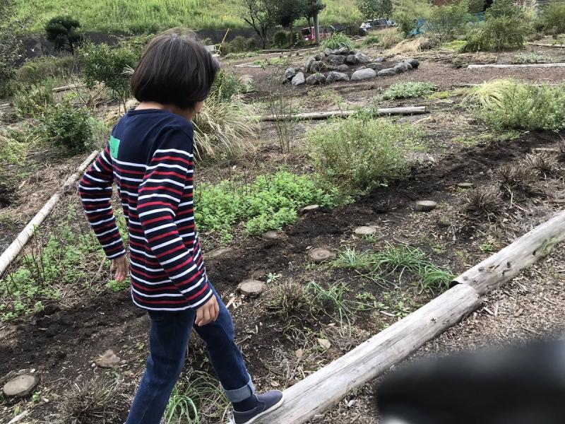 ふたたび畑を散歩。丸太の上を歩きたい