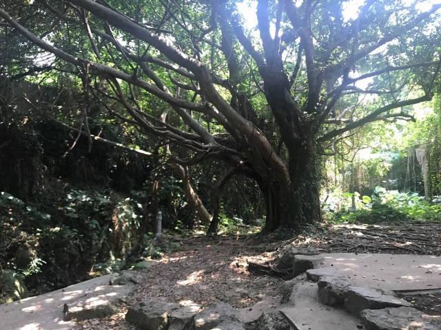 この大木はここで起きた悲劇を見て、恐怖の叫びを聞いていたのでしょうか。
