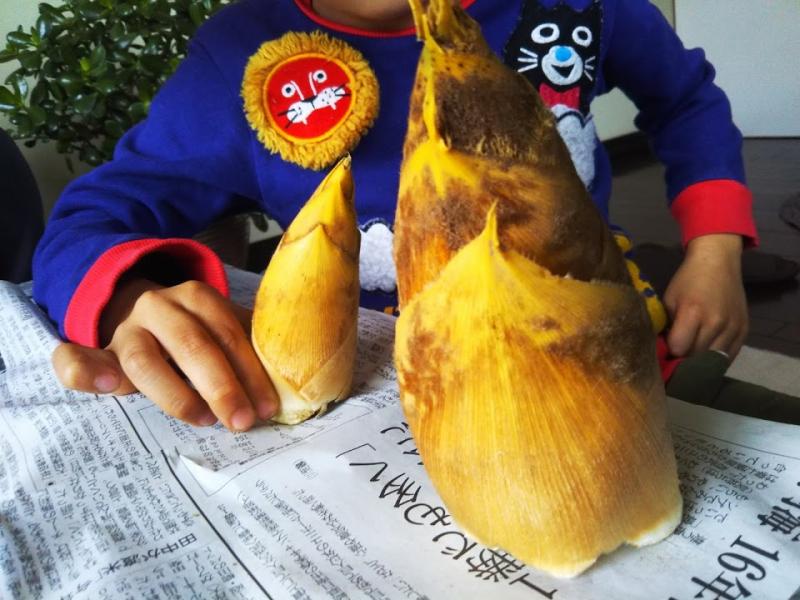 収穫してきたタケノコたち。まだ小っちゃい子供のタケノコです。