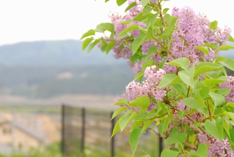 リラの咲く丘の向こうに見えるのは……