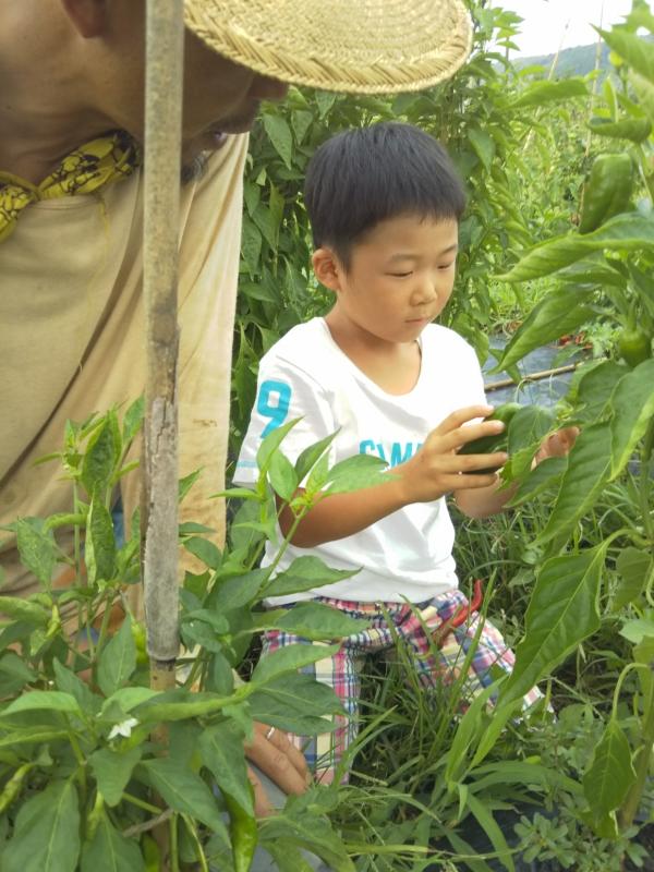 大豆を見に行く前に、今回も野菜の収穫体験をさせていただきました。息子の左足に載っているものは、トウガラシです!
