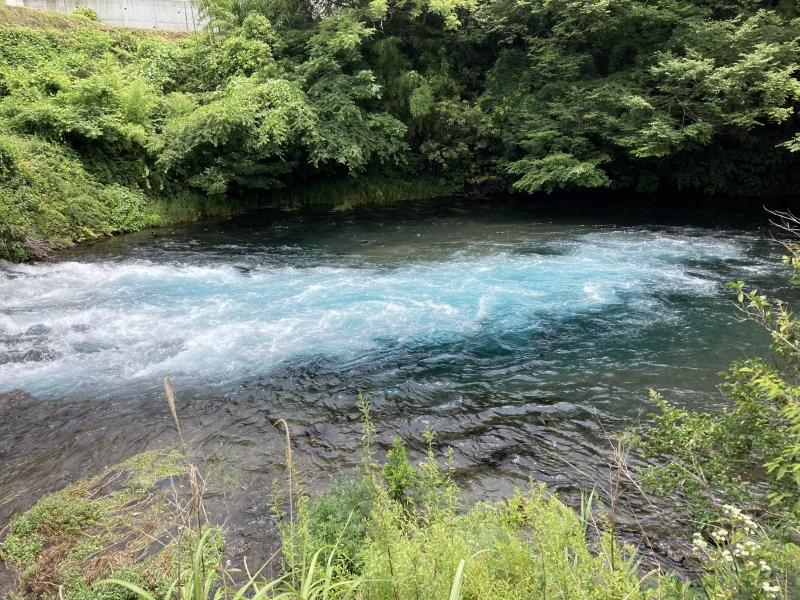 柿田川下流。いまは使われていない眼鏡橋の脚の間で狭まって勢いを増した水は、泡立った部分がこのように青く見えます。日本有数の美しい流れは、この先で狩野川へと注ぎます。