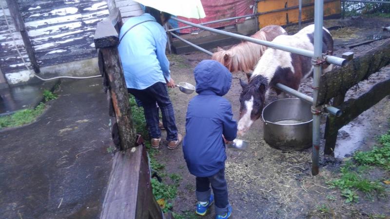 朝からお馬さんの餌やり体験。「かまれないように注意してね」と言われてちょっと怖くなったのかへっぴり腰です