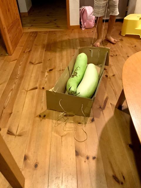 専用箱に紐をつけて重たい夕顔を運ぶ長男。