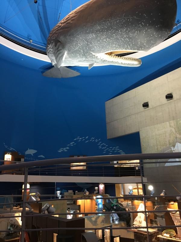 巨大なマッコウクジラの模型