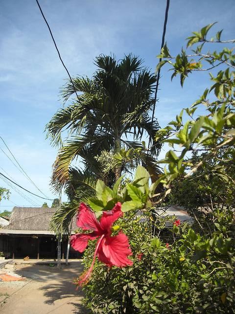南国を感じさせる植物たち