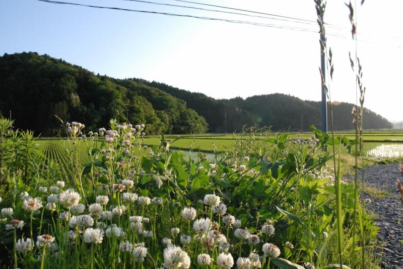 大川小学校の近くの田んぼ(この年からようやく田植えを再開した)でも