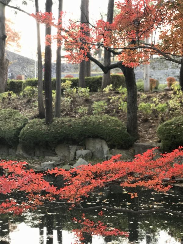 石垣と紅葉と小川