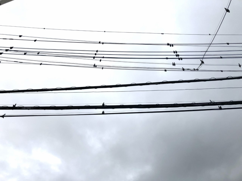 この鳥避けは3年ほどで外されるそうです。どうやら3年で鳥がこなくなるから必要なくなるということらしいのです。