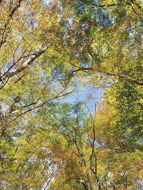 黄色と緑が入り混じる黄葉