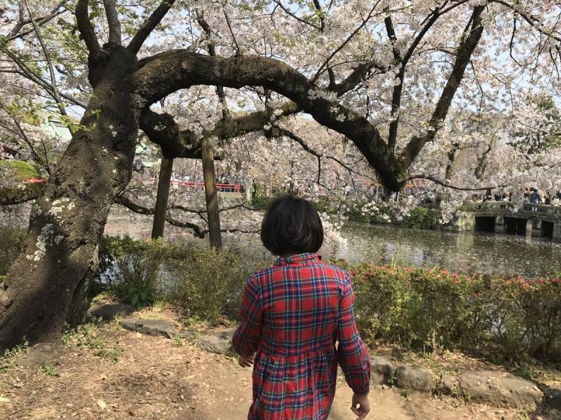 ウチの自閉っ子は日曜日に桜を見たあと
