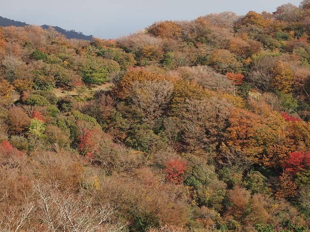 展望台からの紅葉風景です。実際に見た方が心動かされるものがあります