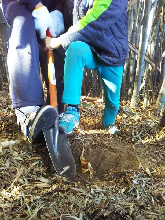 この時期のタケノコは柔らかいので、途中で折れないように慎重に掘り出します。