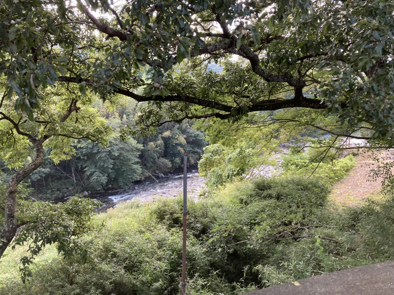 場所は旧修善寺町の大見川が作った崖沿い。「土地の高さ」が大事なことは想像できます。