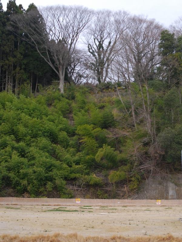 陸前高田の商業施設のすぐ北側には、震災時、多くの住民が避難した本丸公園の高台があるが、正面は切り立った崖だ