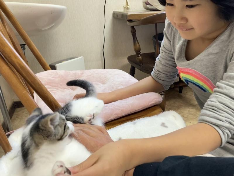 保護ネコちゃんを見に行ったら、ふだん動物にほとんど反応しない娘がこの表情だったので…