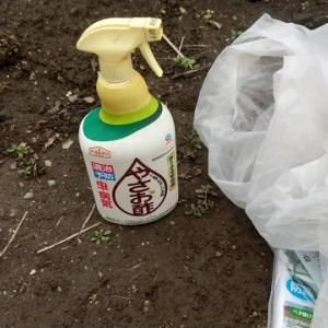 貸し農園で始める野菜作り(11)