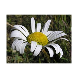 お花になったあいりちゃんたちの命をつなぐバトンリレー ~ちゃっこいメッセージ~