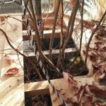 【DIY】 ビニールハウスを作ろう! Part10